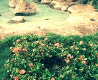 Blommasolvatten stenar paradis Arkivbilder