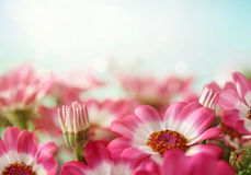 blommasommar Royaltyfria Bilder
