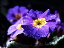 blommasommar Royaltyfri Bild