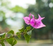 Blommasommar i Vietnam royaltyfri fotografi