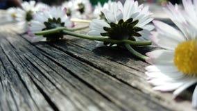 Blommasommardag arkivbild