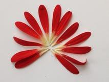 Blommasommarnatur Royaltyfria Foton