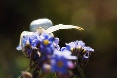Blommaspindel i natur Royaltyfri Fotografi