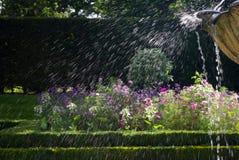 Blommaspringbrunnsprej Royaltyfria Foton