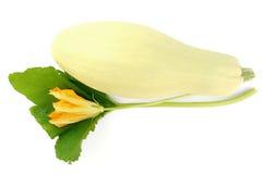 blommasquash royaltyfri foto