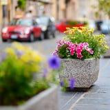 Blommaställning i en liten italiensk stad Arkivbilder