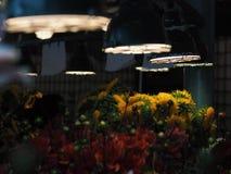 Blommaställning i marknaden för pikställe royaltyfria foton