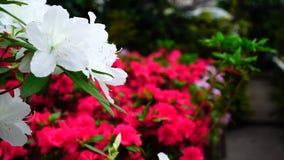 Blommaställning i skyltfönster, närbildfotografi royaltyfri fotografi