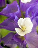blommastaticewhite Arkivfoto