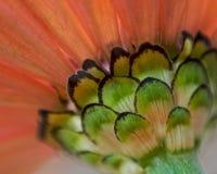 blommastem Arkivfoto
