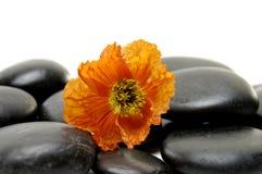 blommastenar Royaltyfri Fotografi