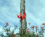 Blommastil Arkivfoton