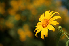 blommasun Arkivfoton