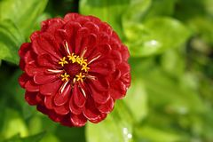 blommatagetes Royaltyfria Bilder