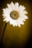 blommatappning Arkivbilder