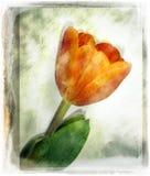 blommatappning royaltyfri illustrationer