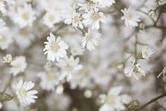 Blommatappning Arkivbild