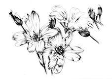Blommateckningen skissar handgjord konst Royaltyfria Bilder