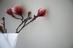 blommatextil Royaltyfria Foton