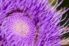 blommathistle Royaltyfria Foton