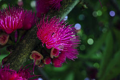 Blommaträd - Flores Arbol Royaltyfria Bilder