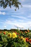blommaträdgård Royaltyfri Fotografi