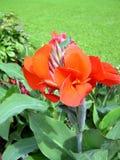 blommaträdgård royaltyfria foton