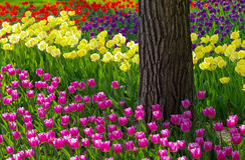 blommaträdgård Arkivfoton
