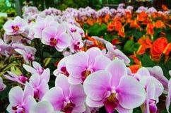Blommaträdgård Royaltyfri Foto