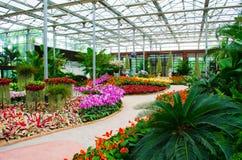Blommaträdgård Arkivbilder
