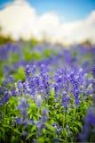 Blommaträdgård Arkivbild