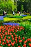 blommaträdgård fotografering för bildbyråer