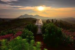 Blommaträdgård av Silancur underbara Magelang Indonesien arkivfoto