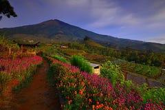 Blommaträdgård av Silancur underbara Magelang Indonesien royaltyfria foton