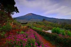 Blommaträdgård av Silancur underbara Magelang Indonesien royaltyfria bilder