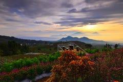 Blommaträdgård av Silancur underbara Magelang Indonesien arkivbild