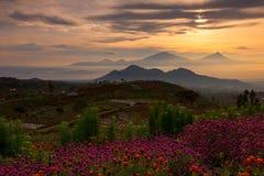 Blommaträdgård av Silancur underbara Magelang Indonesien royaltyfri foto