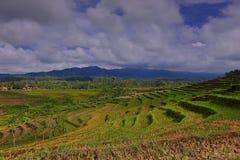 Blommaträdgård av Silancur underbara Magelang Indonesien arkivbilder