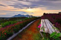 Blommaträdgård av Silancur underbara Magelang Indonesien royaltyfri bild