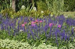 Blommaträdgård från Sanssouci i Potsdam, Tyskland Royaltyfri Fotografi