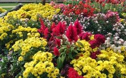 Blommaträdgård i Chiang Rai Arkivbilder