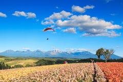 Blommaträdgård i Kamifurano, Hokkaido, med bergsikt På bakgrund en paraglider och många turister Arkivfoto