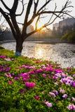 Blommaträdgård i morgon Royaltyfri Bild
