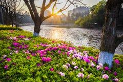 Blommaträdgård i morgon Arkivbild
