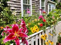 Blommaträdgård i Nantucket royaltyfria foton