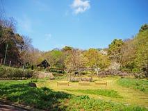Blommaträdgård Japan Arkivfoto