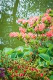 Blommaträdgård och damm Arkivbilder
