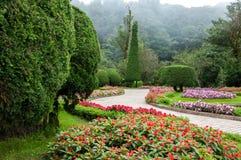Blommaträdgård och mistbakgrund Arkivfoton