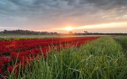 Blommaträdgård och morgonsolsken royaltyfri foto