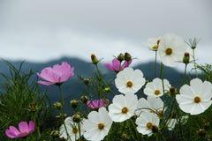 Blommaträdgård på berget Arkivfoto